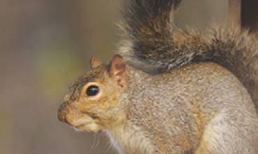 Safe Wildlife Control and Animal Removal